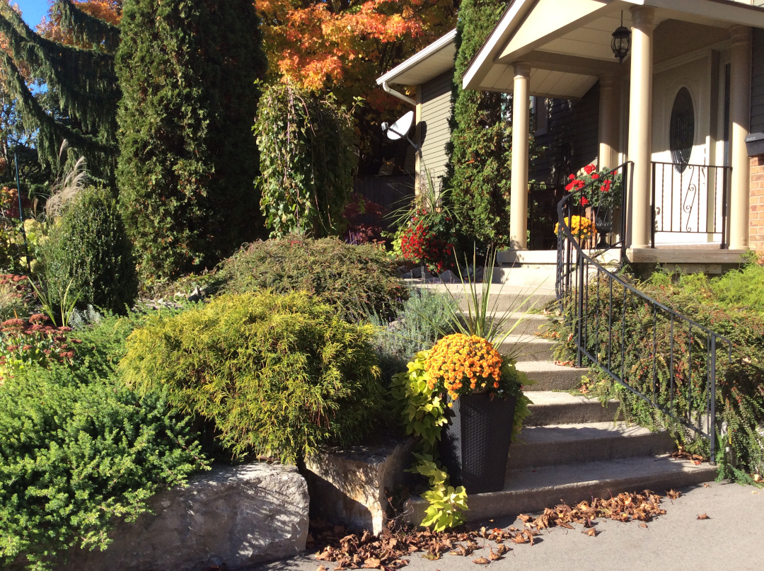 front yard garden with lots of evergreens in fall