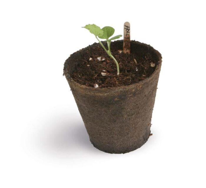 Fertil Pots