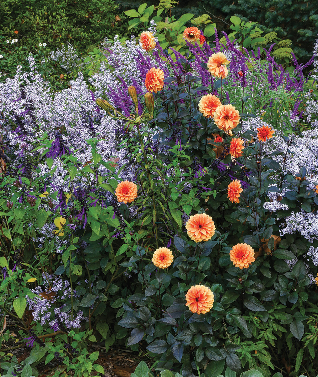 A flowering garden scene showing a mix of orange, purple and silver colors