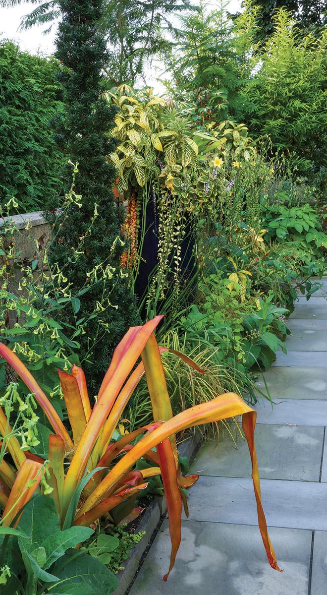 chartreuse and orange foliage plants