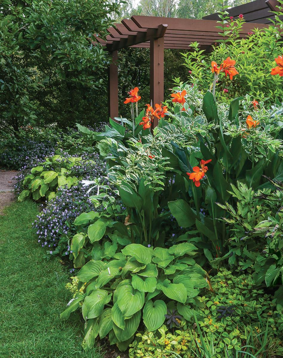 garden bed with orange flowers and pergola