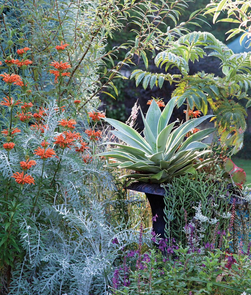 silver and orange plants