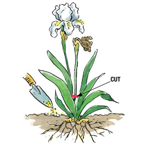 helping plants rebloom