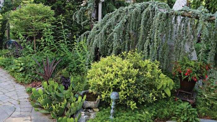 Plants with 4-Season Interest