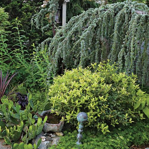 plants with 4 season interest