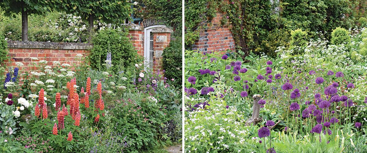 garden with purple and orange flowers