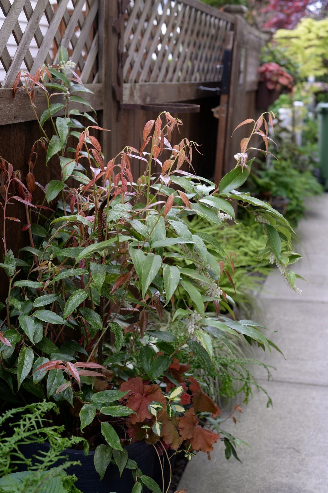Looking down a narrow space lined with plants in front of a wooden fence