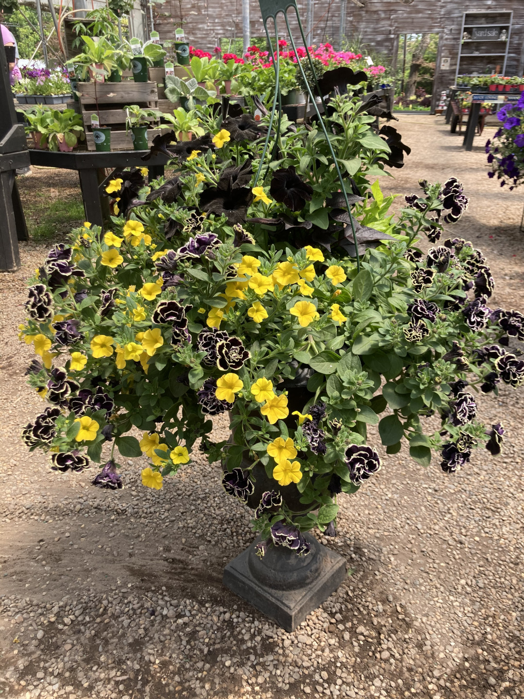 Container with yellow and black flowers