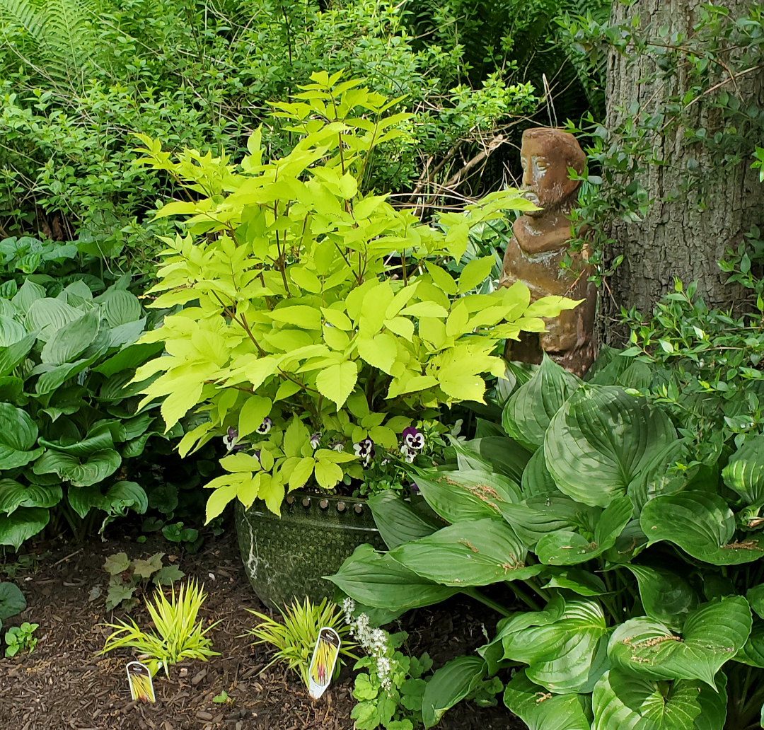 bright yellow-green plant surrounded by darker green leaves