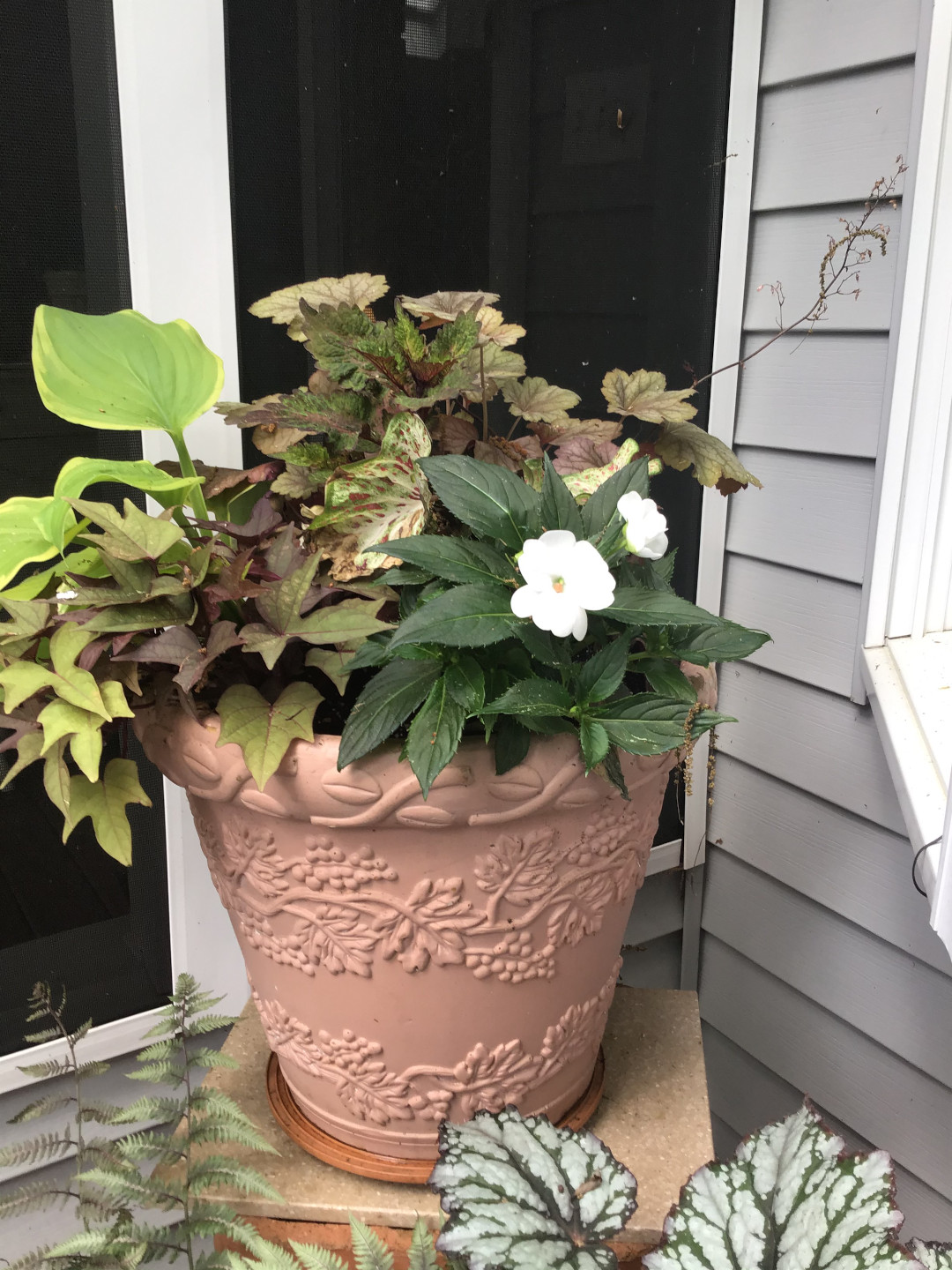 container filled with foliage plants and one white flower