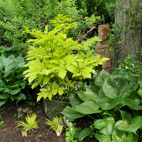 A bright yellow-green plant surrounded by darker green leaves