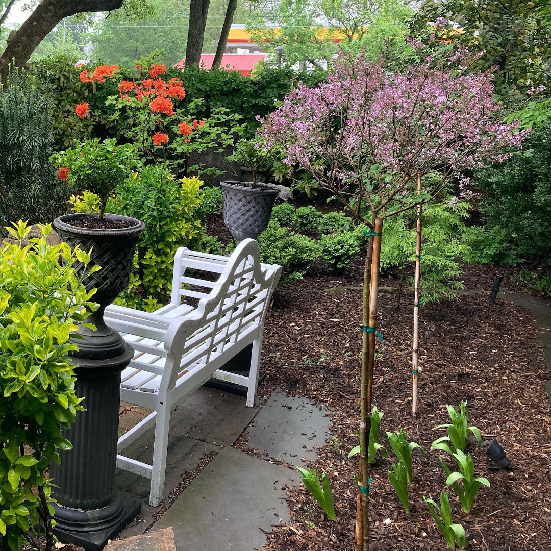 flowering trees and shrubs in a courtyard