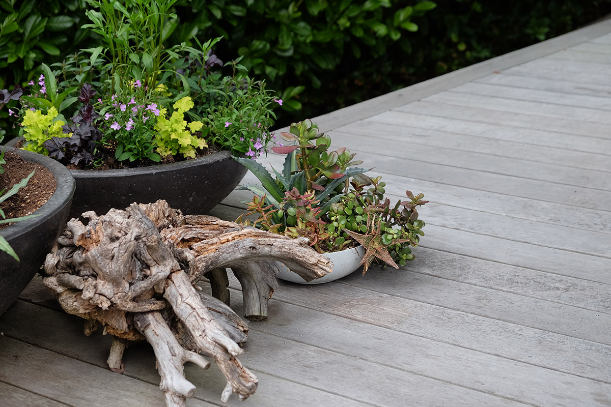 small container with succulents next to a larger container and piece of drift wood