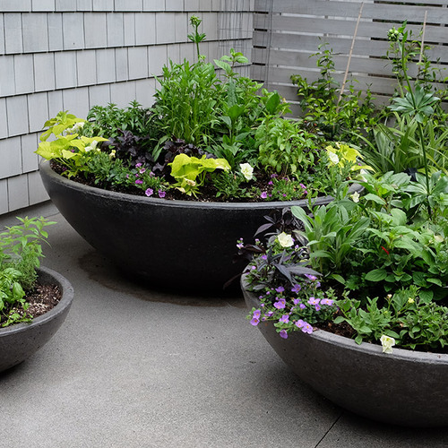 Mix of perennials in summer containers