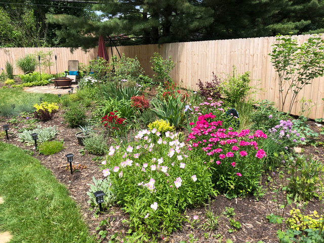 garden bed with pink flowers