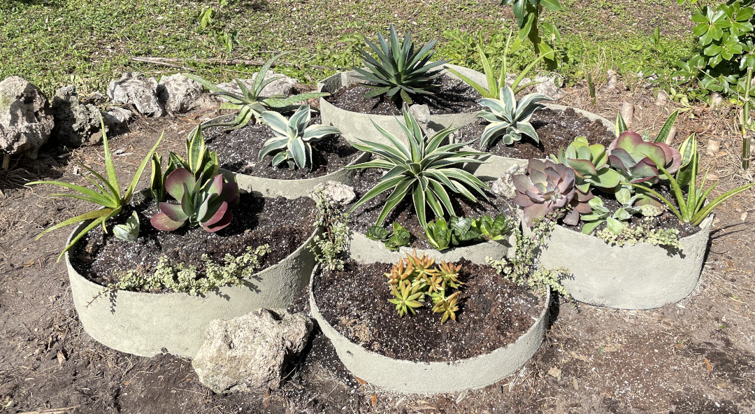 Round raised beds planted with a variety of succulent plants