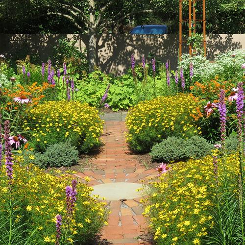 colorful pollinator garden