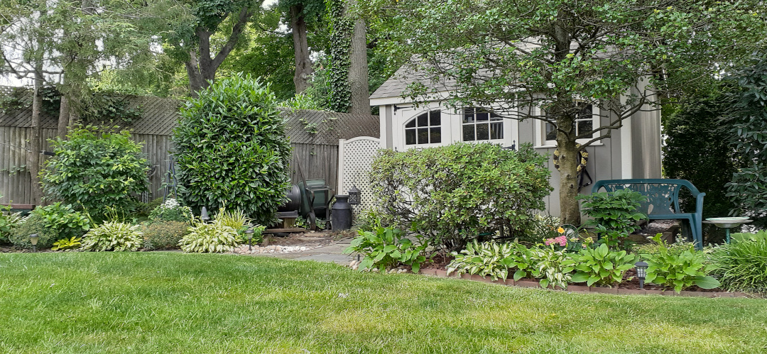 A shed just visible behind shrubs and a garden