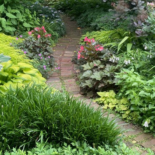 garden path with lots of foliage plants on either side