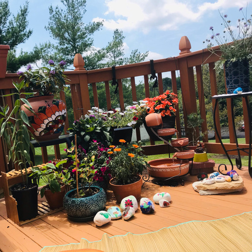small potted butterfly garden in the sun
