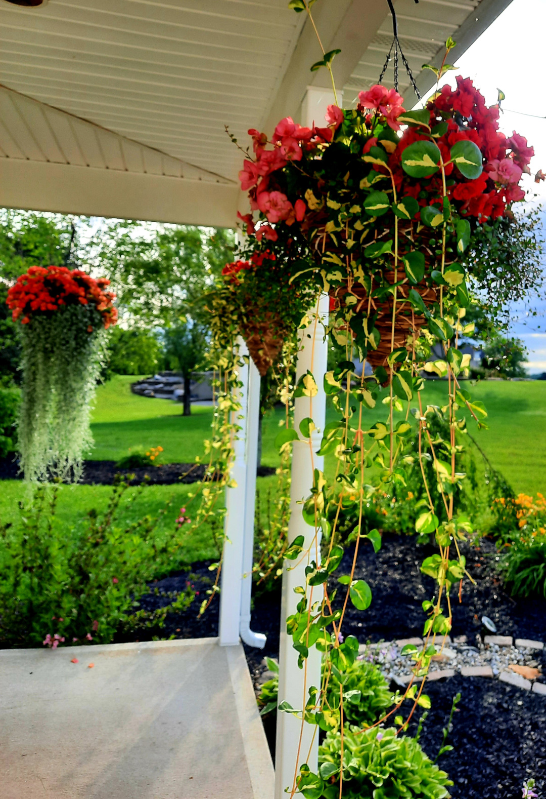 hanging baskets with trailing foliage around a covered porch