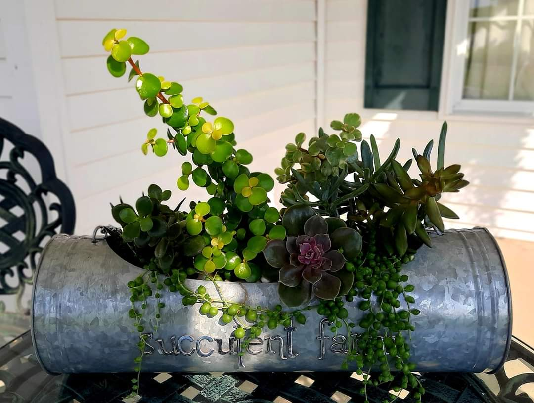 succulents in a long tin container