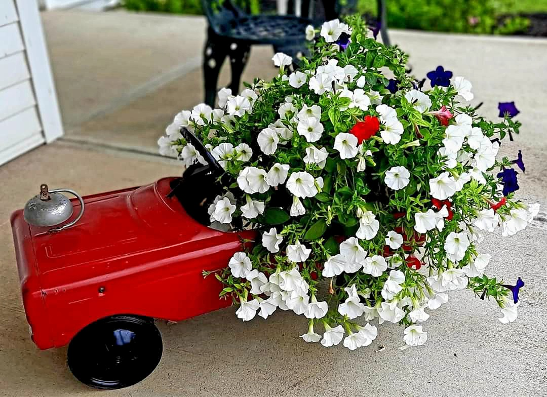 white petunias in a red car container