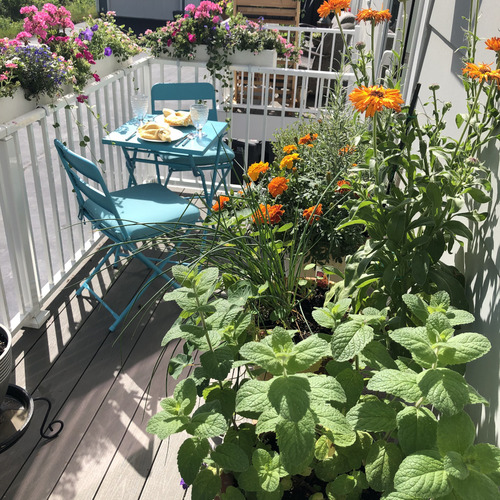 flowers and herbs growing on a small porch