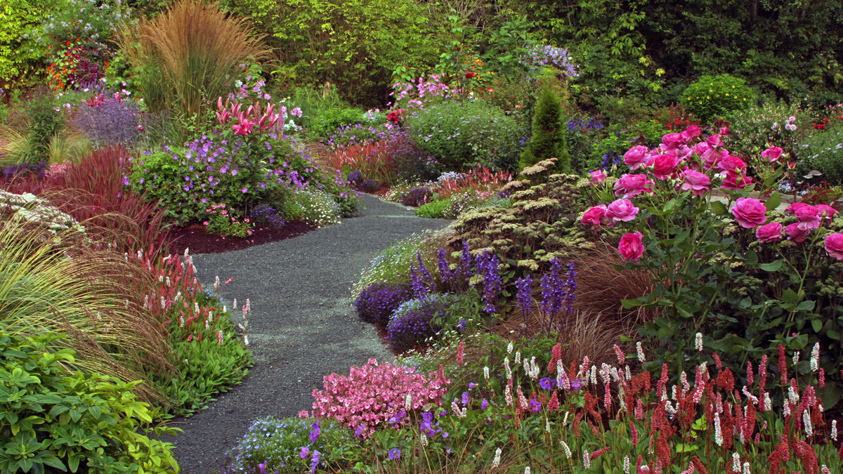 This garden is in the Pacific Northwest, so a midsummer peak—when the rains have passed and the temperatures have warmed up—was ideal. The plants Sharon chose did not all bloom during the peak, but most of did. Some of her favorites were 'Border Jewel' Himalayan knotweed, the annual diascia, and an assortment of roses, Asiatic lilies, and perennial geraniums.