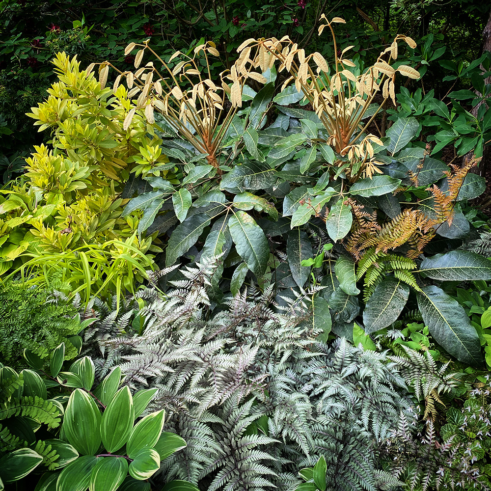 garden bed with lots of cool foliage plants