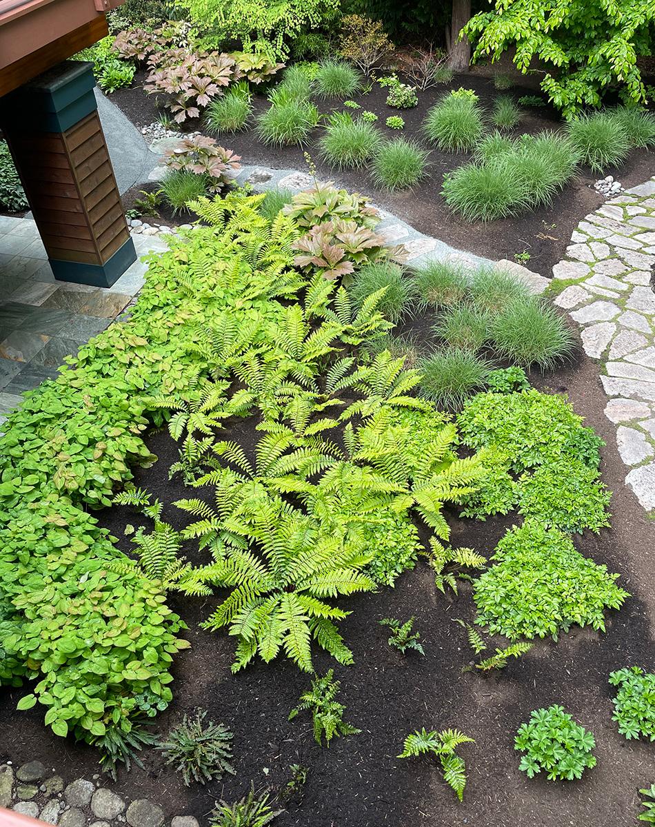 garden bed full of ferns seen from above