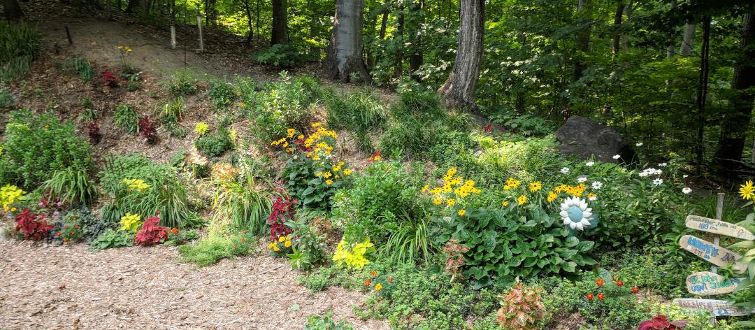 edge of woodland garden
