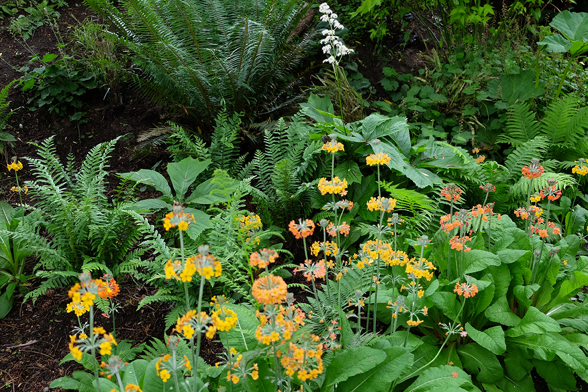 ferns with summer flowers in front