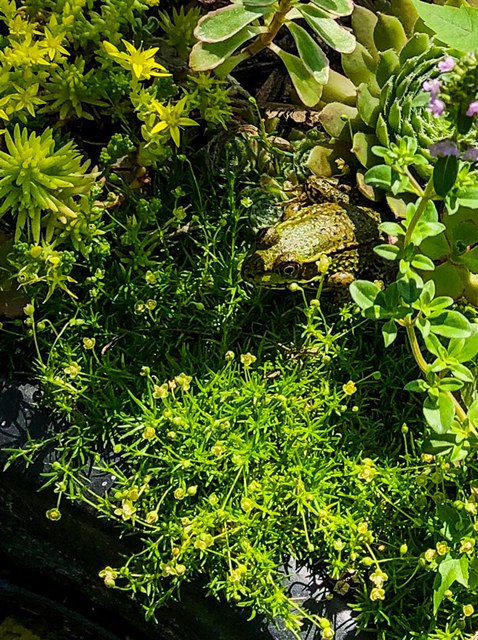 frog amongst green plants