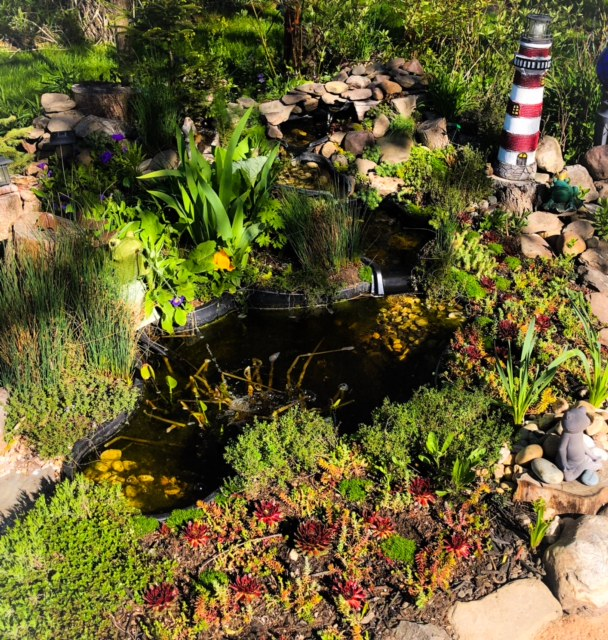 small garden pond with waterfalls surrounded by plants