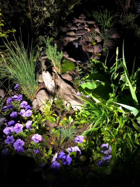garden pond lit up at night