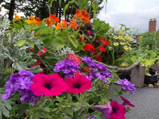 colorful mixed annual flowers