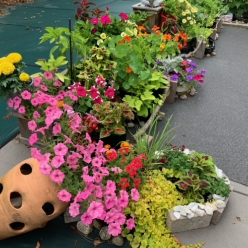 grouped container plantings look like garden bed