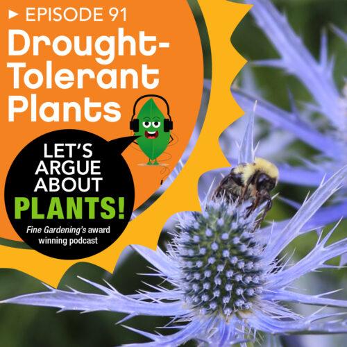 Episode 91: Drought-Tolerant Plants