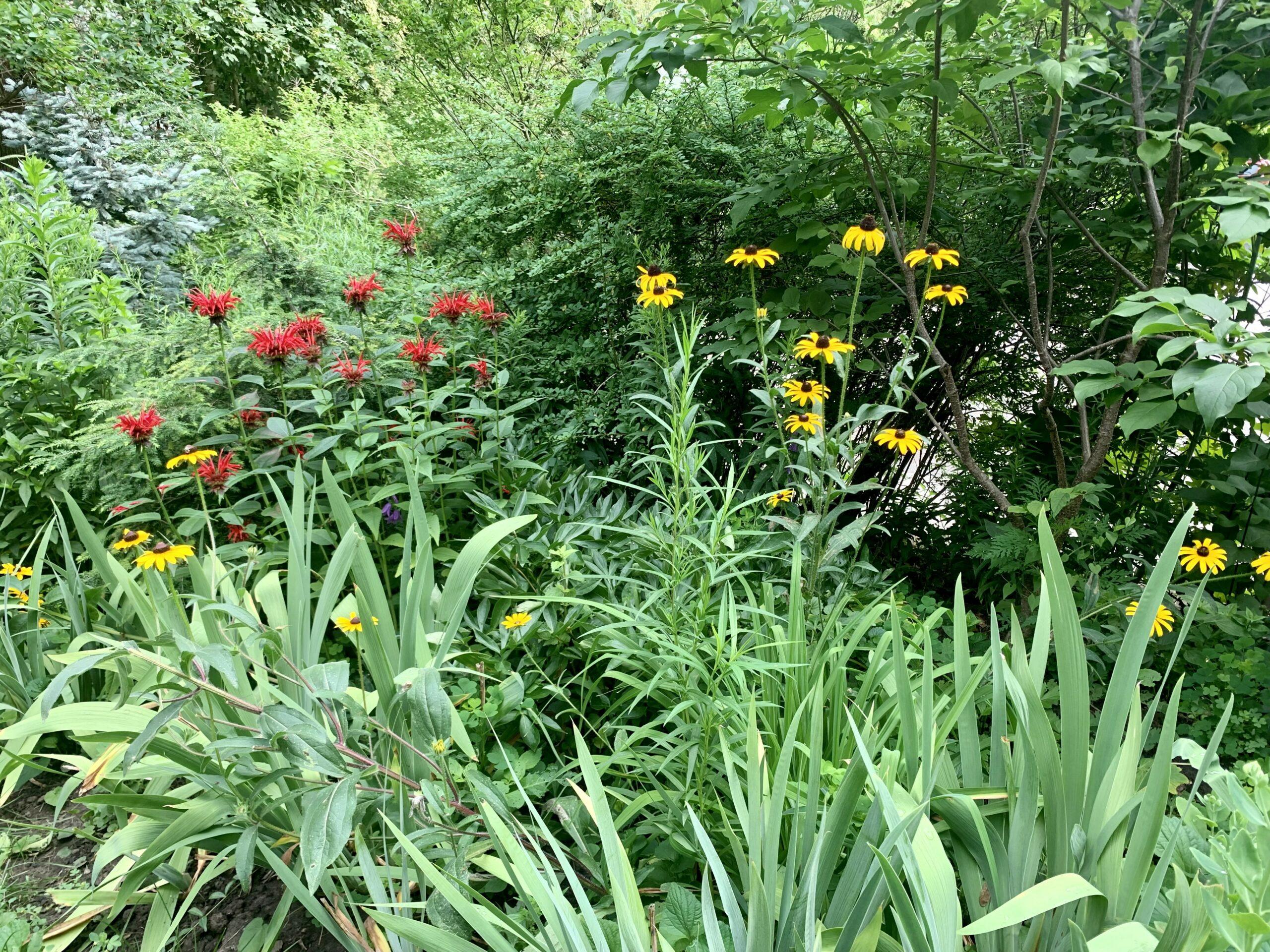 mix of shrubs and perennials