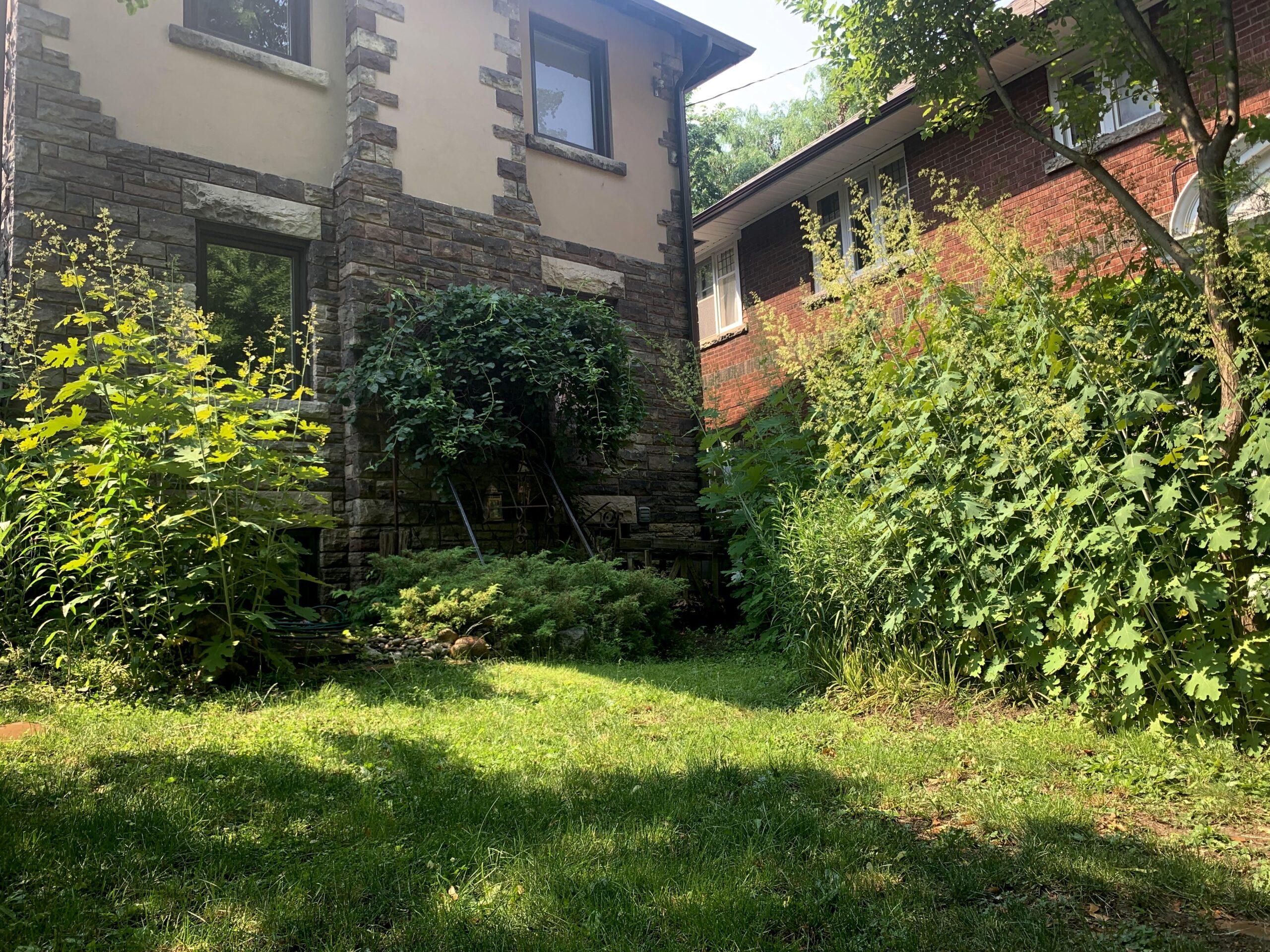 small backyard garden