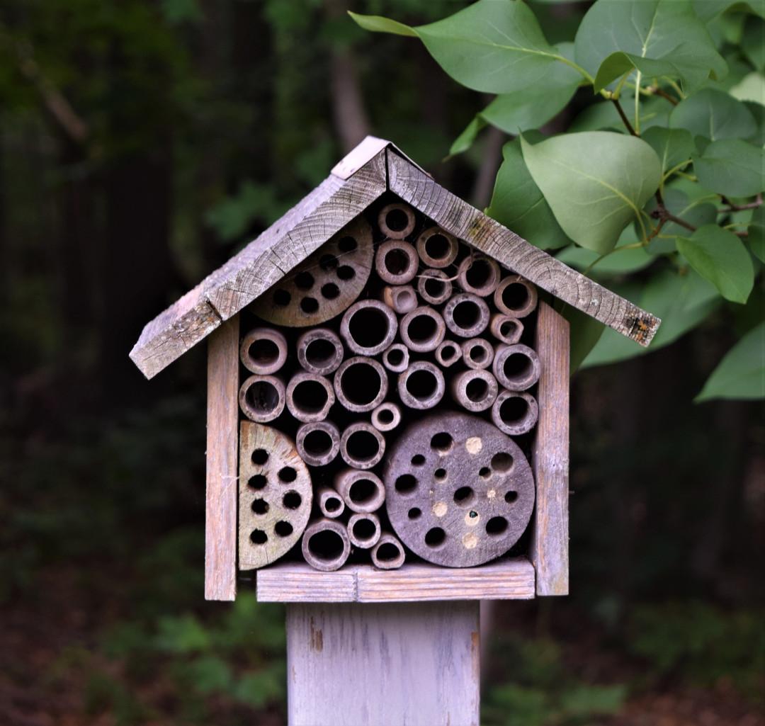 pollinator house