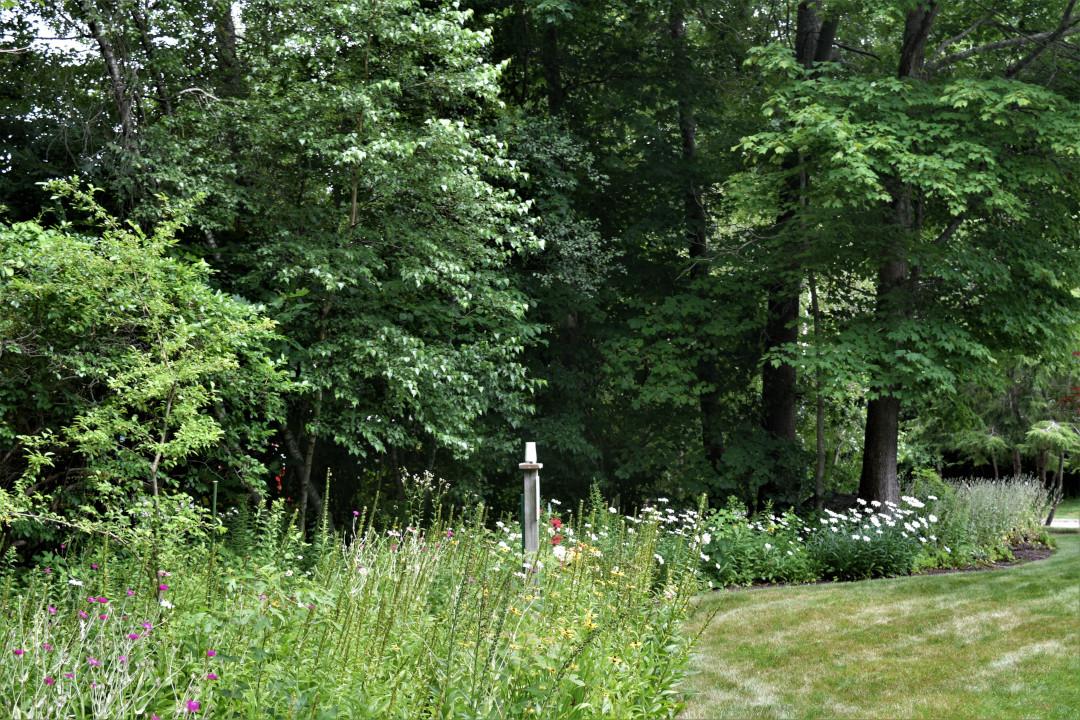 meadowy perennial border