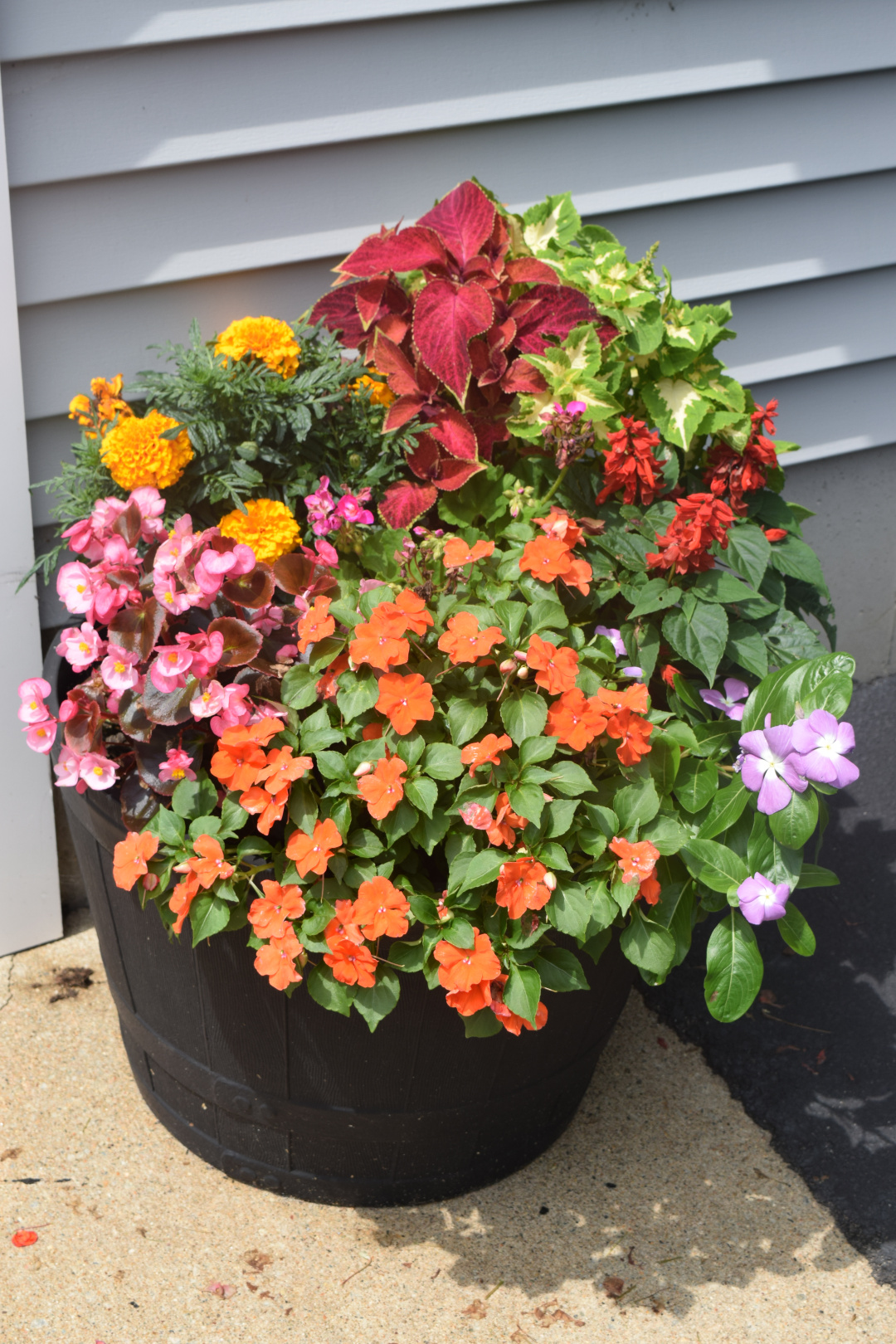 bright annuals in a contiainer