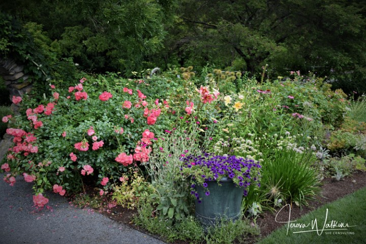 garden bed with pink roses and purple petunias