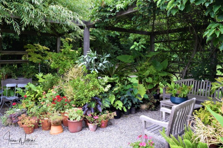 shady seating area surrounded by potted plants