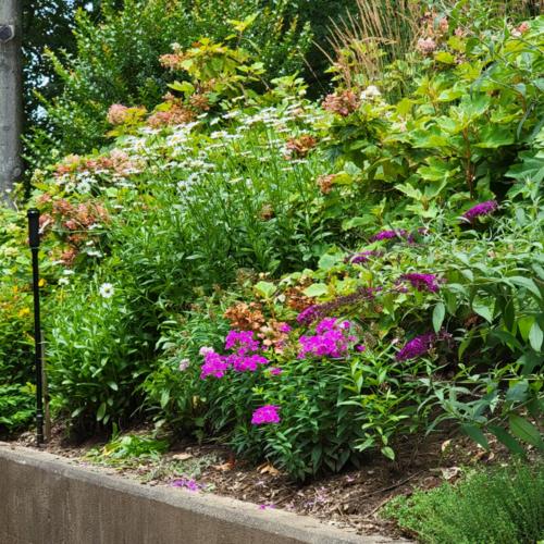 slope garden full of perennials