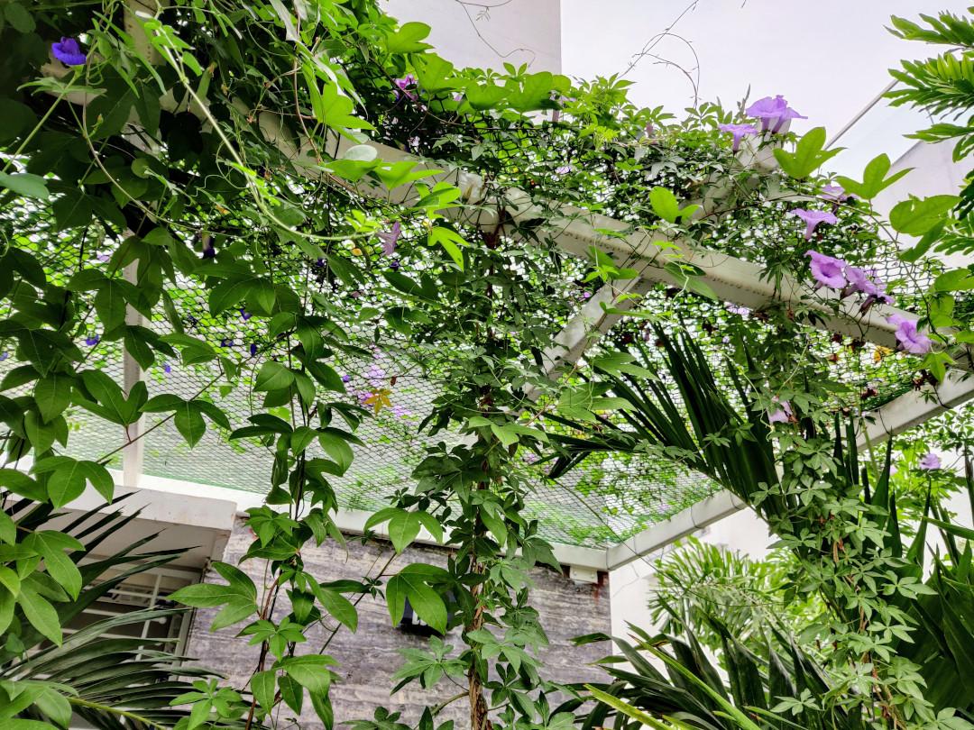 pergola covered with vines