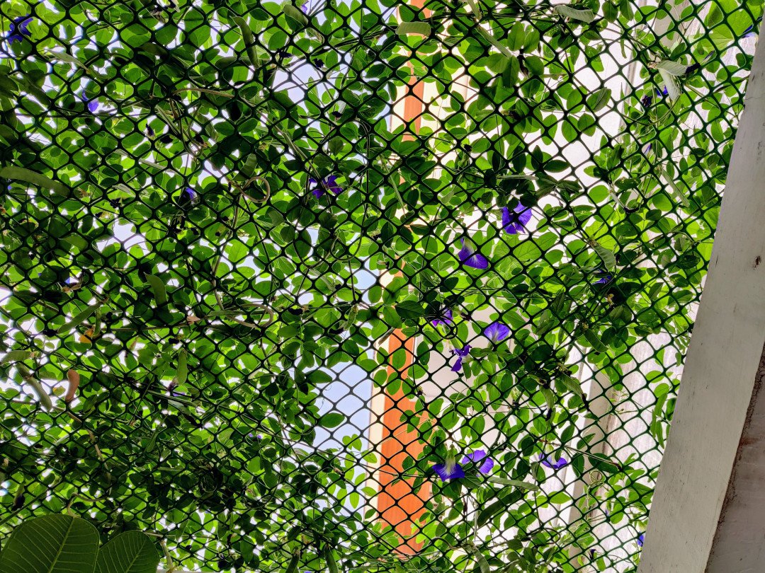 mesh pergola covered with purple flowers