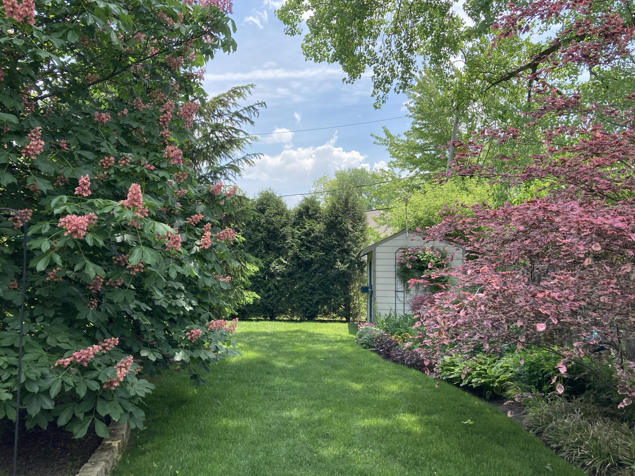 Garden path with pink shrubs on both sides